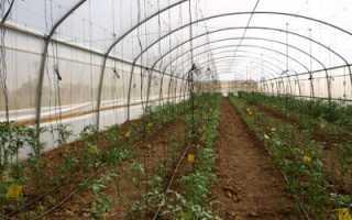 5 прибыльных идей выращивания в теплице